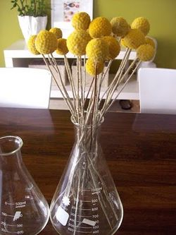 Billy-buttons-beaker